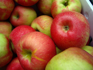 mcintosh-apples