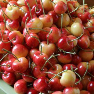 rainier-cherries