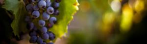 slider-grapes