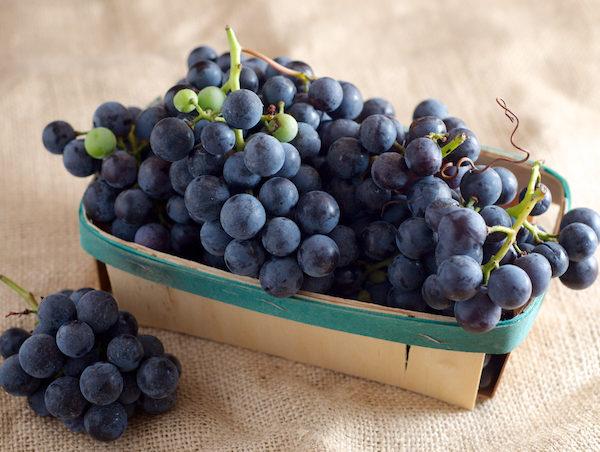 Concord-Grape